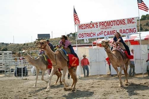 Camel Racing Nevada